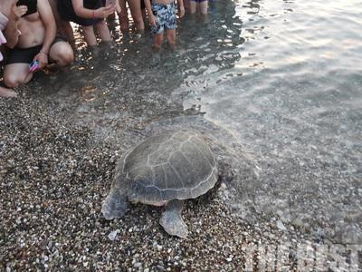 Καρέ καρέ η επιστροφή μιας χελώνας καρέτα καρέτα στη θάλασσα, στην Πλάζ της Πάτρας - ΒΙΝΤΕΟ