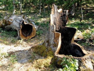 Τραγικό τέλος για τον αντιδήμαρχο Αλμωπίας Πέλλας – Τον καταπλάκωσε δέντρο