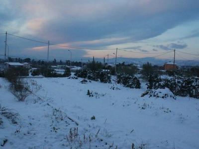 Σημαντικές ζημιές προκάλεσαν οι χιονοπτώσεις και ο παγετός στη Δυτική Αχαΐα- Αίτημα του δήμου να κηρυχθεί παγόπληκτος