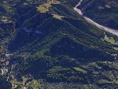 Το μοναδικής αξίας πευκοδάσος που βρίσκεται μια ανάσα από το κέντρο της Πάτρας