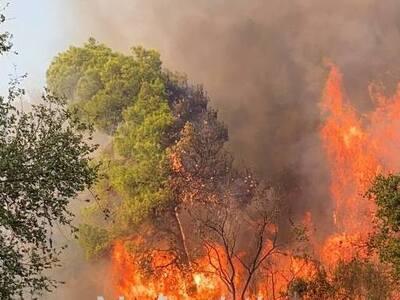 Φωτιά σε πευκοδάσος στο Παραδείσι στο Τρ...
