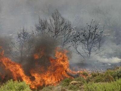 Φωτιά στη Σταμάτα Αττικής κοντά σε σπίτια