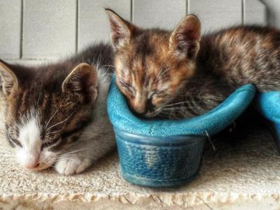 Ηλεία: Νεογέννητο γατάκι βρέθηκε μέσα σε κάδο σκουπιδιών