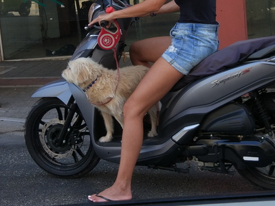 Λατρεμένοι σκύλοι απολαμβάνουν τη βόλτα με το μηχανάκι