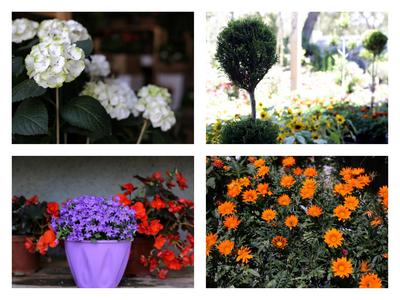 Πώς να ανανεώσετε τον κήπο και το μπαλκόνι σας ενόψει καλοκαιριού - Συμβουλές από έναν ειδικό